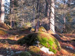 Skogen i uppland